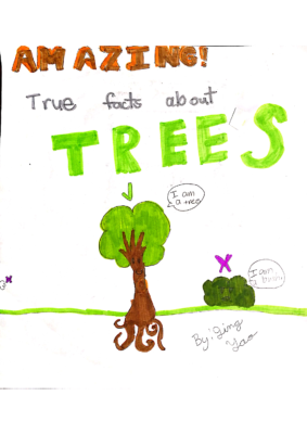 Amazing! The True Facts of Trees by JingYao S.